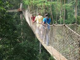 Kakum Canopy Walkway