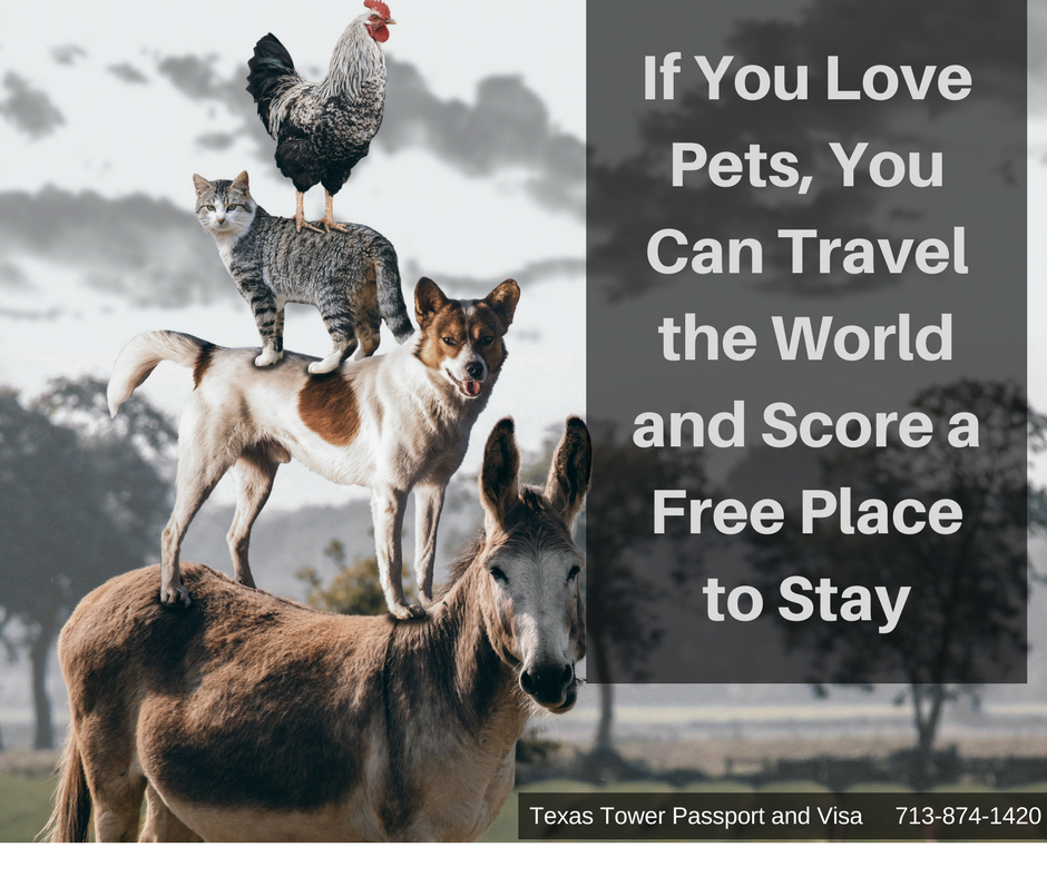 If You Love Pets, You Can Travel the World and Score a Free Place to Stay